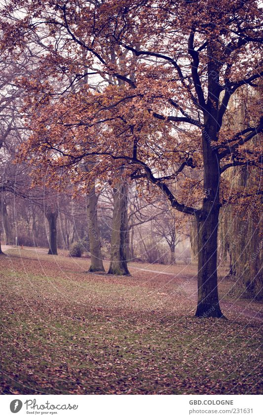 autumn forest Nature Landscape Autumn Bad weather Fog Tree Dark Creepy Cold Natural Gloomy Brown Emotions Moody Sadness Loneliness Sustainability Seasons