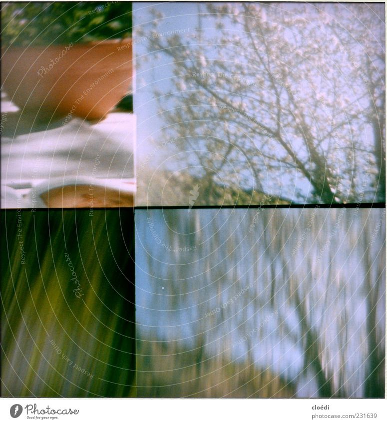 Blue Green Tree Plant Flower Blossom Garden Spring Violet Twigs and branches Spring fever Pot plant Lomography Image format