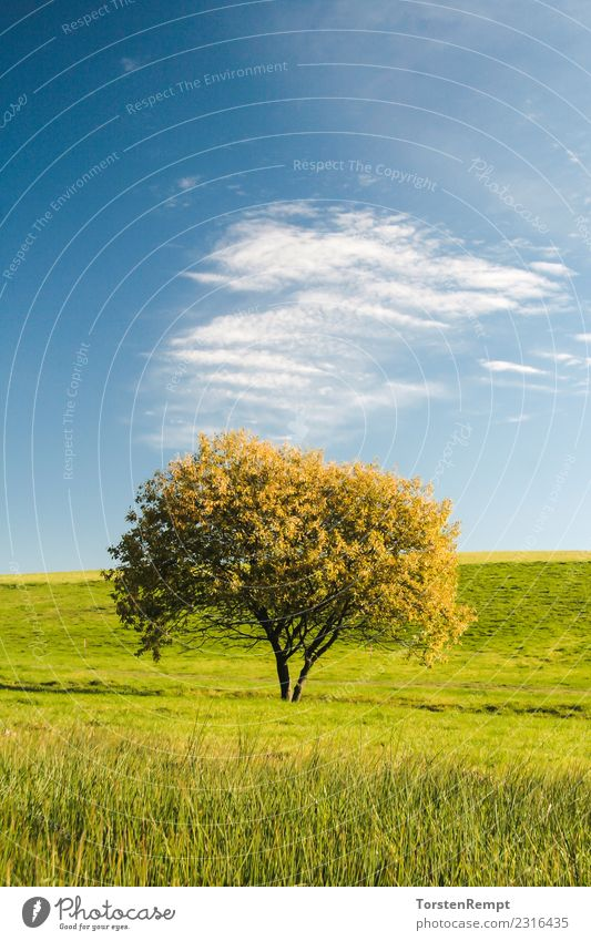 TREE Summer Nature Landscape Clouds Tree Meadow Blue outlook Vantage point Germany Sky Thuringia Thueringer Wald Colour photo Exterior shot Deserted Day