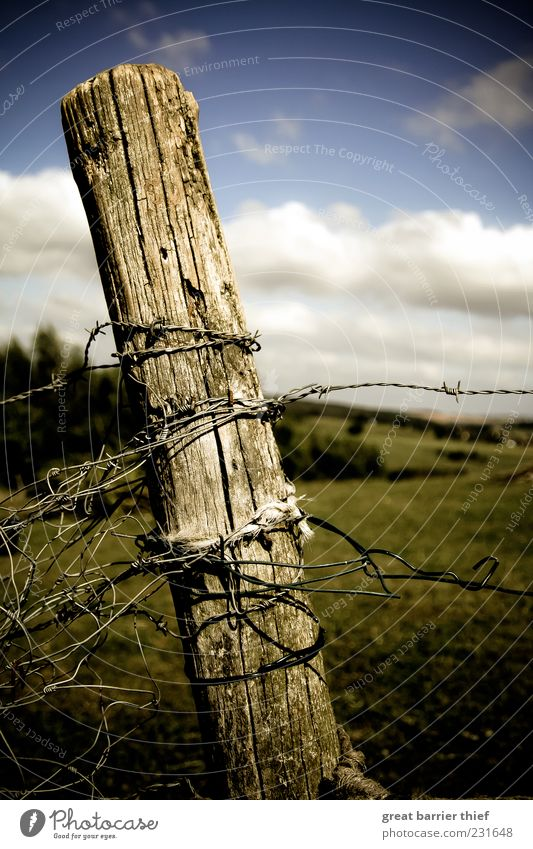 Symbolic change of times Environment Nature Landscape Sky Clouds Beautiful weather Grass Wood Knot Multicoloured Barbed wire fence Fence Wooden stake Summer