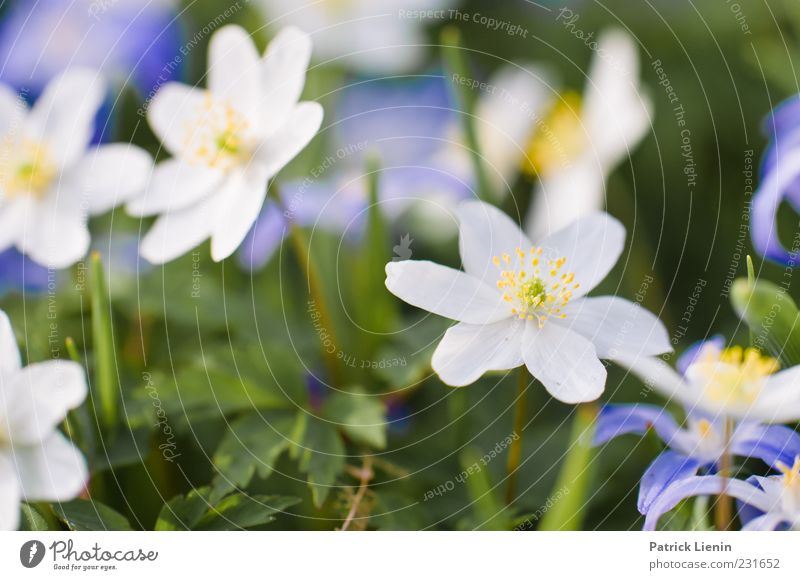 Nature White Beautiful Plant Flower Leaf Yellow Environment Happy Blossom Garden Spring Weather Earth Soft Delicate