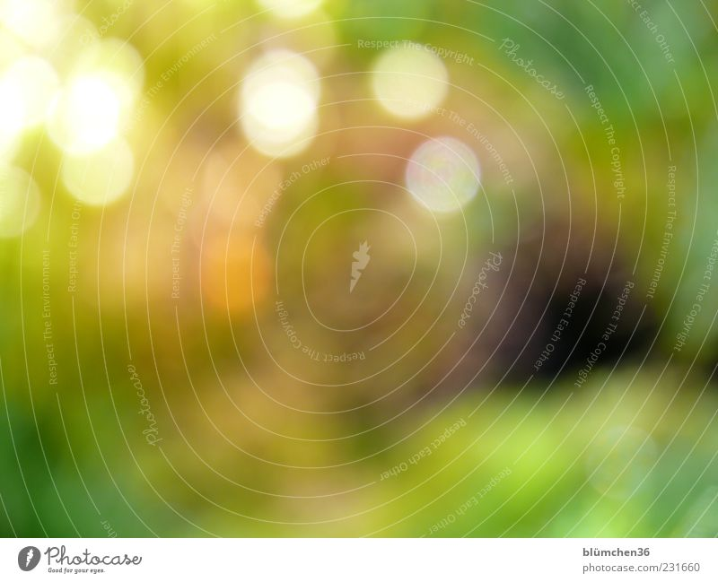 light points Plant Sunlight Moss Esthetic Exceptional Exotic Yellow Green Spring fever Inspiration Life Point Abstract Colour photo Exterior shot Experimental