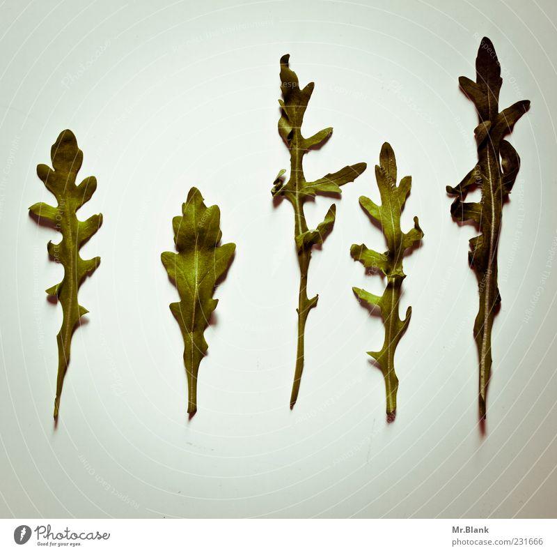 Old Green Leaf Gray Food Healthy Vegetable Delicious Lettuce Direct Edible Nutrition Deserted Salad leaf