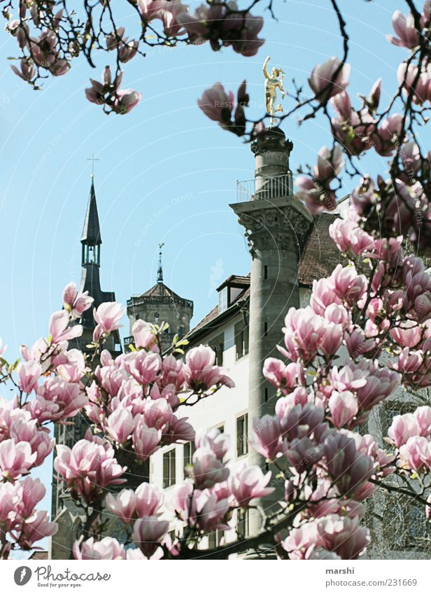 Stuttgart in spring Nature Plant Sky Tree Tower Tourist Attraction Monument Old Pink Magnolia tree Magnolia blossom Magnolia plants Cute Vista Spring Blossoming
