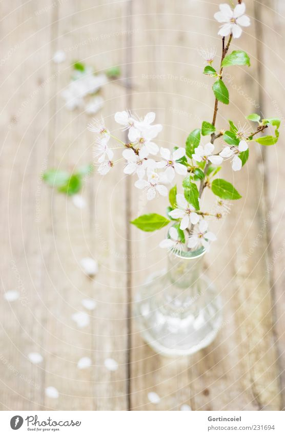 Nature Green White Beautiful Leaf Wood Blossom Spring Bright Glass Fresh Decoration Delicate Twig Vase Blossom leave