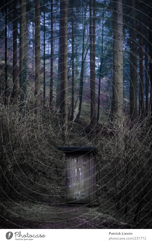 Nature Blue Tree Plant Forest Cold Dark Environment Wood Natural Bushes Elements Hill Toilet Hut Wooden house