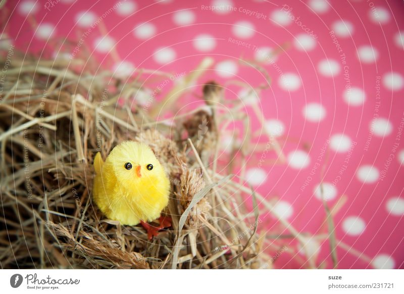 Beautiful Animal Yellow Small Funny Bird Pink Sit Decoration Cute Kitsch Easter Trashy Straw Nest Spotted