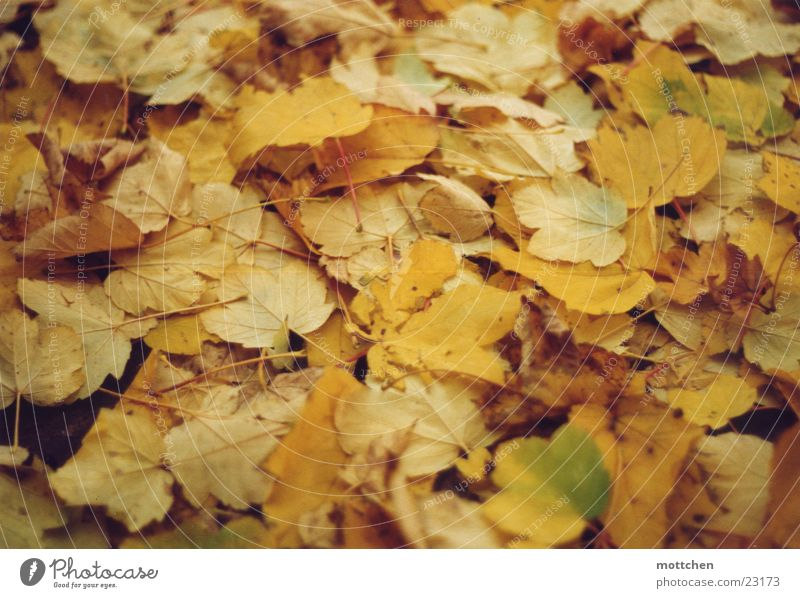 Leaf Autumn Carpet Colouring