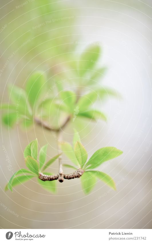 Nature Green Beautiful Plant Leaf Environment Spring Air Esthetic Exceptional Soft Elements Branch Delicate Botany Shoot