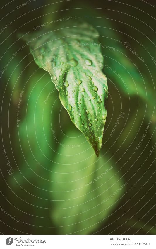 Green leaf close-up Lifestyle Summer Garden Nature Plant Leaf Foliage plant Park Forest Virgin forest Background picture Drops of water Tropical Colour photo