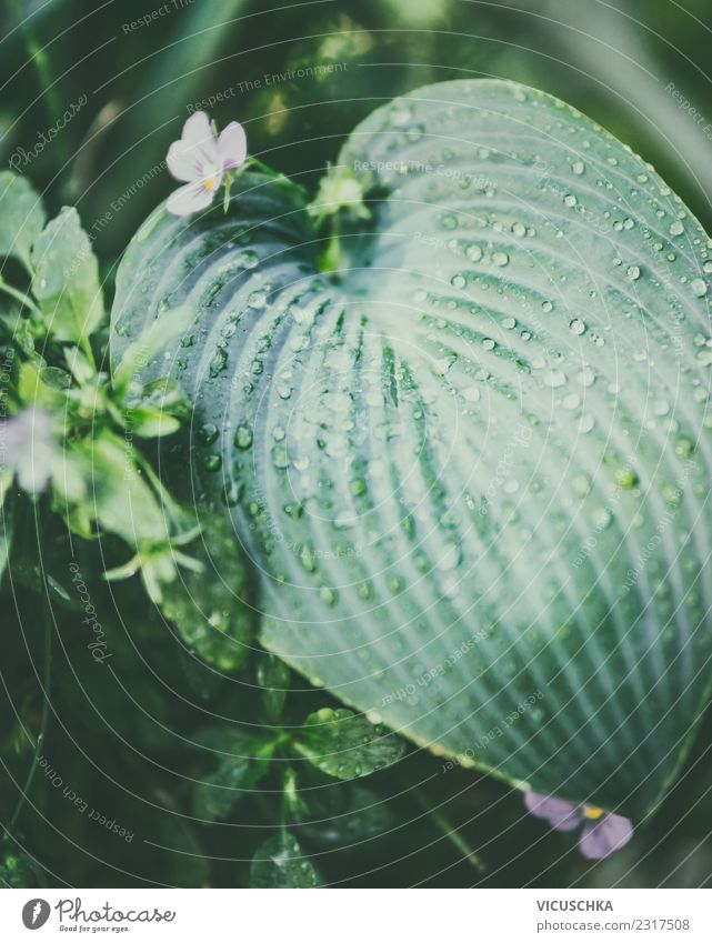 Tropical leaf with drops of water Lifestyle Summer Garden Nature Plant Leaf Foliage plant Park Background picture Green Watercraft Botany Virgin forest Damp