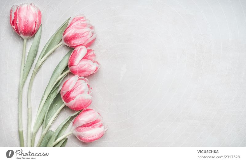 Pastel pink tulips Style Design Feasts & Celebrations Mother's Day Wedding Birthday Nature Plant Spring Flower Tulip Decoration Bouquet Love Pink