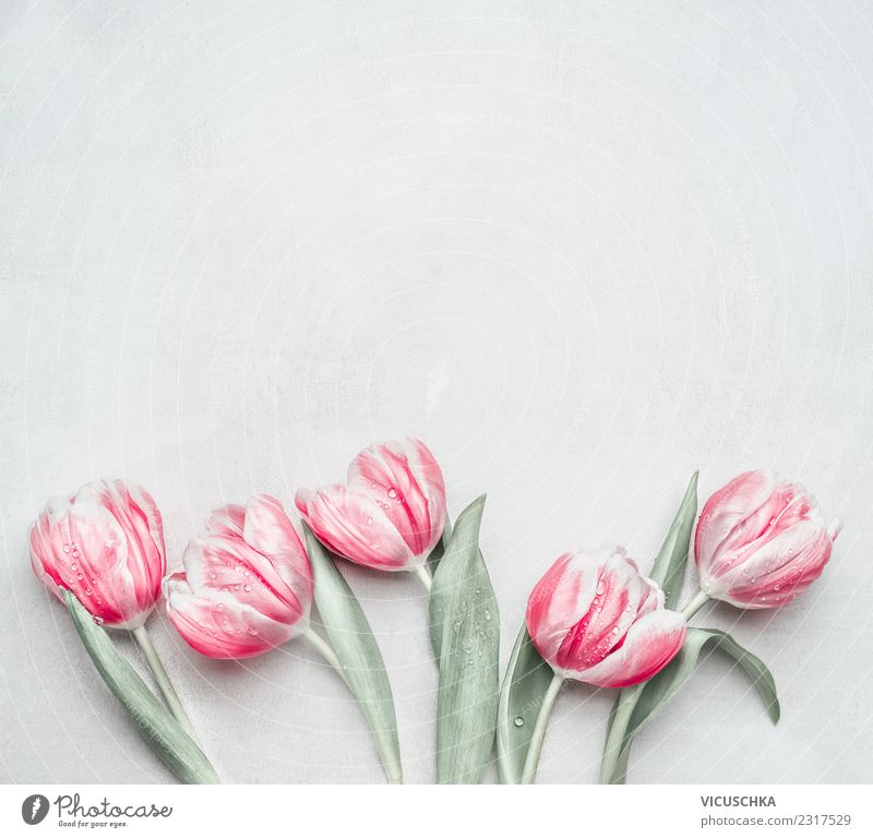 Spring background with pastel tulips Style Design Feasts & Celebrations Mother's Day Wedding Birthday Flower Tulip Pastel tone Pink Background picture