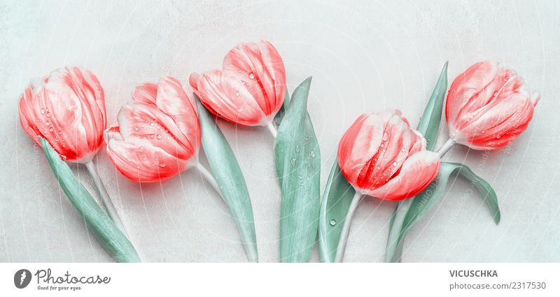 Red Tulips Style Design Feasts & Celebrations Mother's Day Plant Spring Flower Blossom Decoration Bouquet Ornament Love White Beautiful Colour photo
