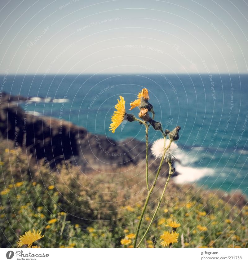 Sky Nature Water Plant Ocean Summer Flower Leaf Meadow Environment Landscape Grass Blossom Coast Spring Weather