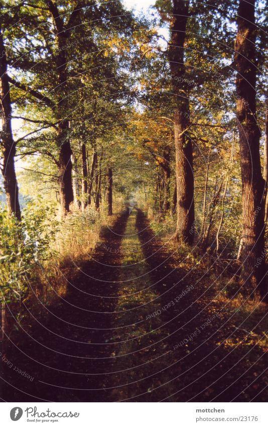 Tree Leaf Autumn Lanes & trails Footpath Avenue