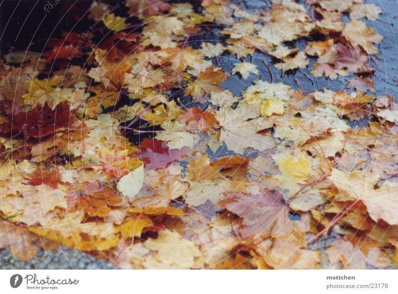 Leaf Autumn Rain Wet Puddle