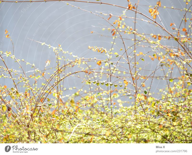 Nature Plant Leaf Spring Growth Bushes Branch Blossoming Delicate Twigs and branches Light green
