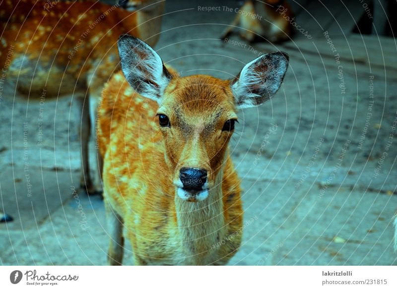 Nature Animal Wild animal Esthetic Pelt Serene Smooth Caution Roe deer Peaceful Game park