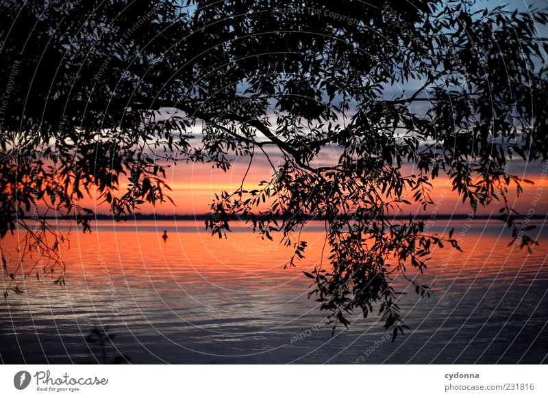 Sky Nature Water Tree Leaf Loneliness Calm Far-off places Relaxation Life Environment Landscape Freedom Dream Lake Horizon
