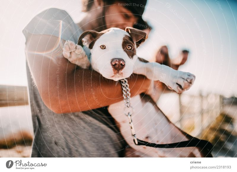 Cute puppy an his owner at the beach Lifestyle Joy Happy Summer Sun Man Adults Friendship Nature Animal Park Pet Dog Smiling Embrace Happiness Puppy Hold Sunset