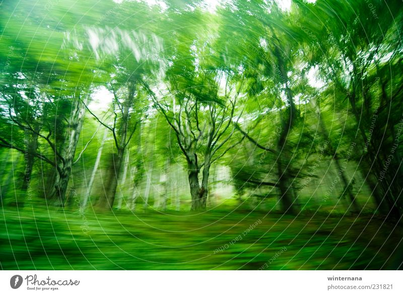 Green ghost trees Environment Nature Landscape Earth Spring Beautiful weather Tree Virgin forest Mountain Wood Emotions Happiness Bravery Optimism Willpower