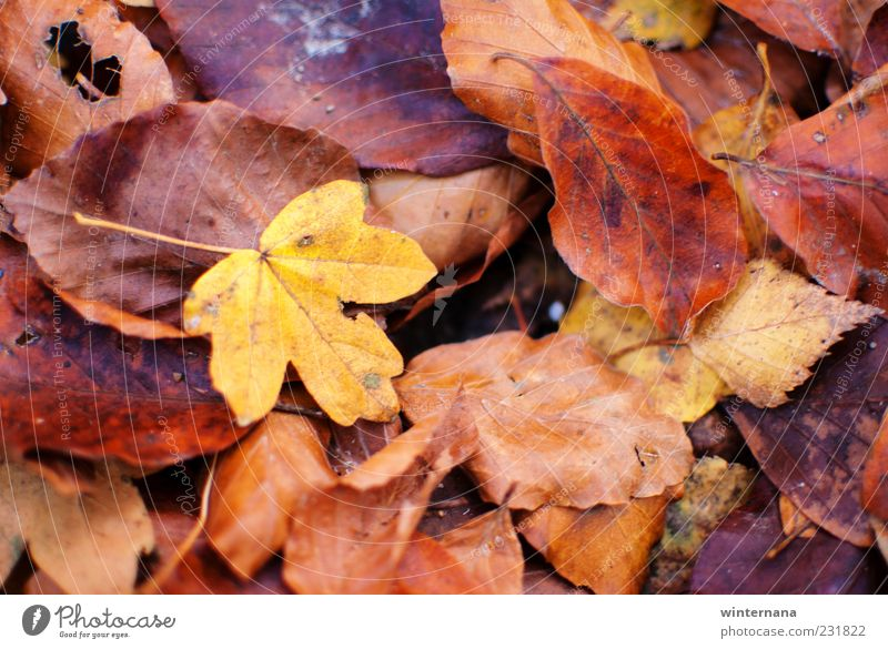 Autumn leafs Nature Plant Leaf Mountain Environment Emotions Freedom Contentment Warm-heartedness Romance Belief Peace Serene Safety (feeling of) Determination