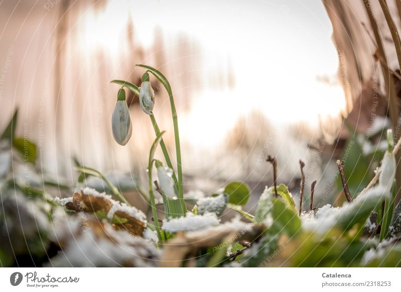 Over and under. Temperatures. Nature Plant Air Sunrise Sunset Sunlight Winter Beautiful weather Ice Frost Snow Flower Leaf Blossom Snowdrop Meadow Forest