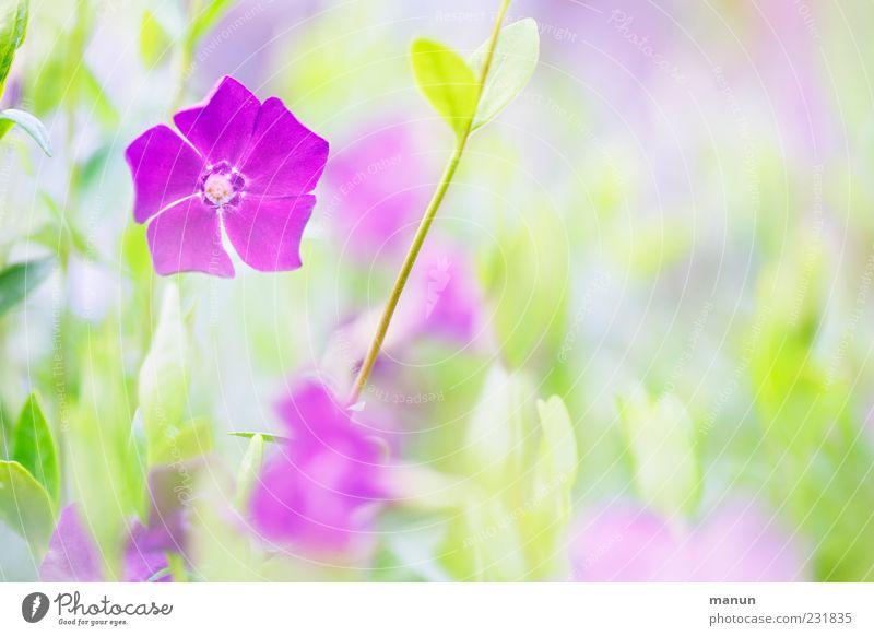 Nature Green Beautiful Plant Flower Leaf Blossom Spring Bright Pink Violet Spring fever Light Spring flower Spring colours