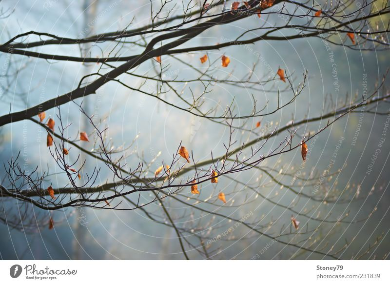 Nature Tree Plant Leaf Calm Forest Fog Branch Beautiful weather Twig Haze Beech tree