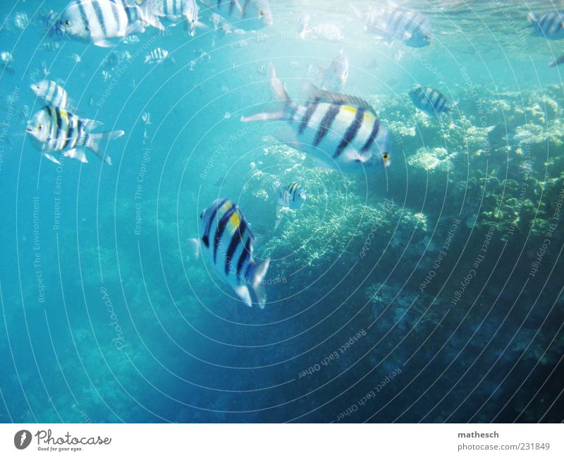 Do you swim here often? Summer Ocean Water Reef Coral reef Red Sea Fish Group of animals Flock Swimming & Bathing Dive Bright Wet Blue Multicoloured