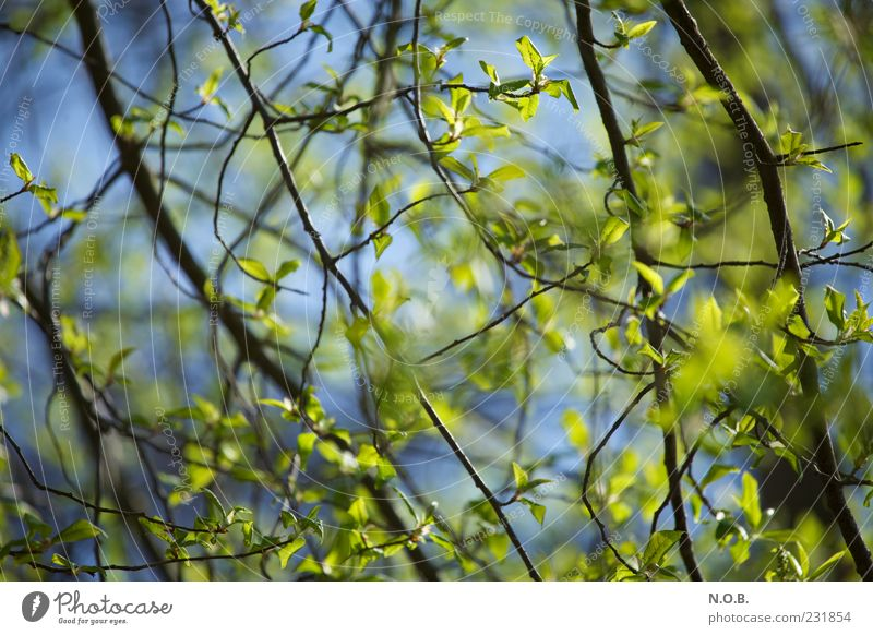 Sky Nature Blue Green Tree Plant Leaf Environment Emotions Spring Natural Beautiful weather Twig Spring fever Shadow