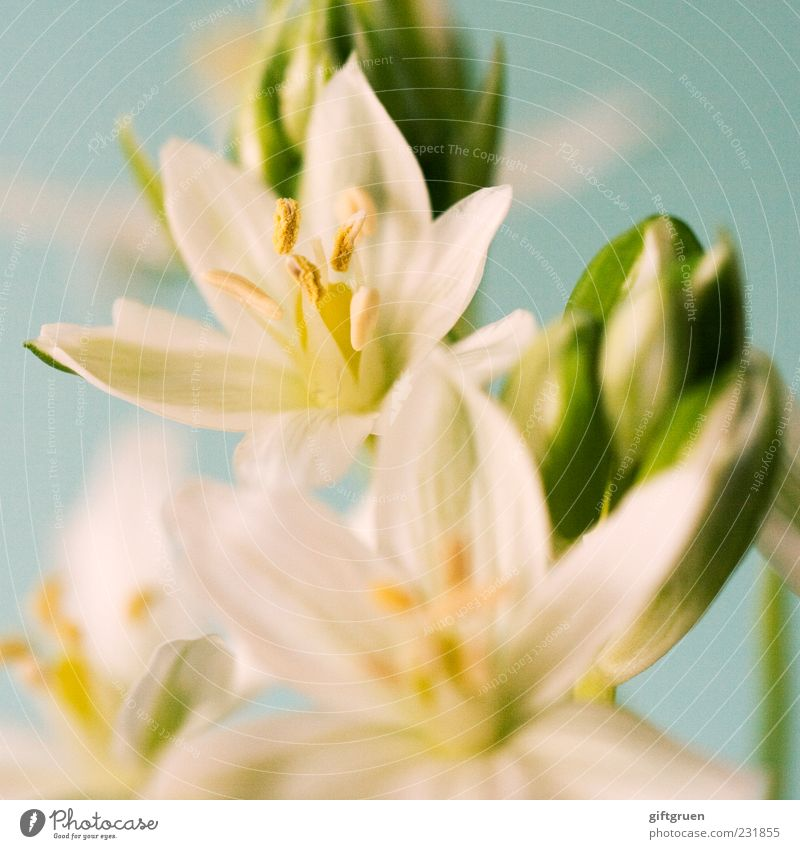 sparkling spring Environment Nature Plant Spring Flower Blossom Blossoming Growth Esthetic White Bud Pistil Part of the plant Blossom leave Star (Symbol)