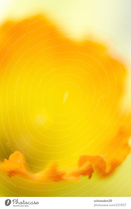 Nature Beautiful Red Plant Summer Flower Yellow Emotions Blossom Spring Moody Orange Esthetic Growth Illuminate Edge