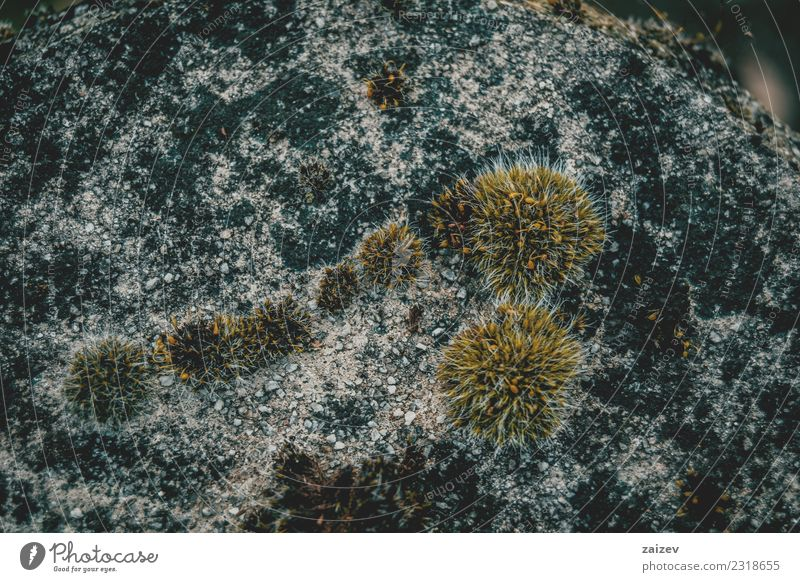 Moss on old stone with dark colors Nature Old Plant Colour Green Environment Natural Grass Small Stone Design Rock Dirty Growth Fresh Concrete