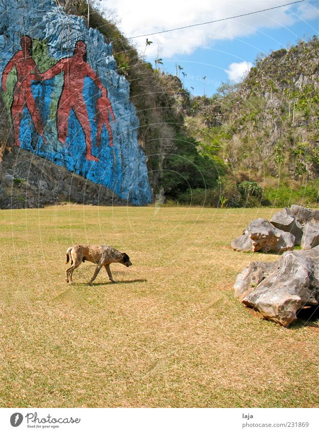 Dog in front of mural Art Painter Painting and drawing (object) Nature Landscape Elements Sky Clouds Beautiful weather Rock Valle de Viñales Animal Pet 1 Stone
