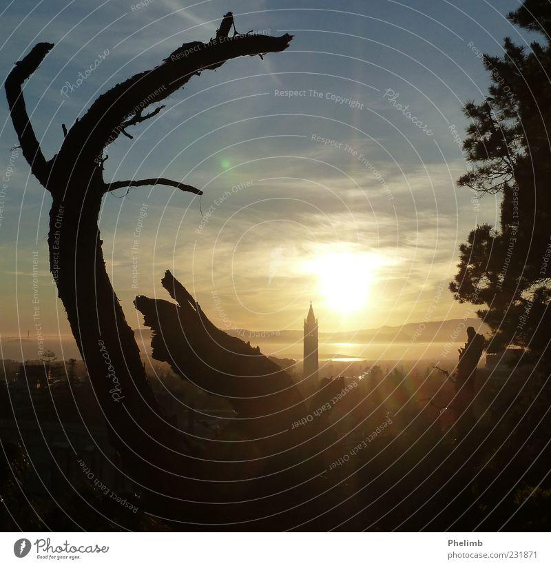 Berkeley Sunset Sky Nature Tree Environment Landscape Building Esthetic Tower Spring fever Light
