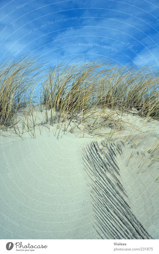 Sky Nature Blue Vacation & Travel Beach Relaxation Grass Sand Tourism North Sea Beach dune Beautiful weather Well-being Marram grass