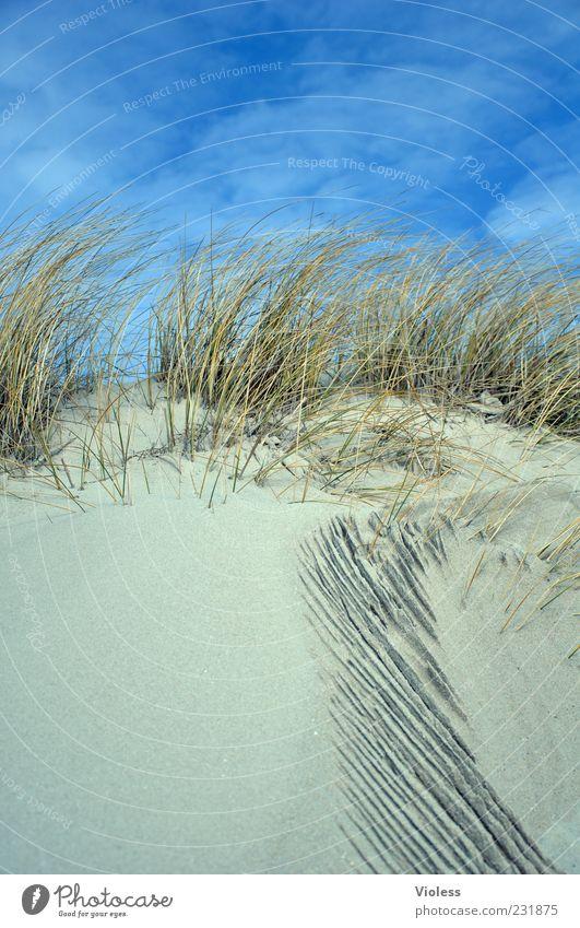 Sky Nature Blue Vacation & Travel Beach Relaxation Grass Sand Tourism North Sea Beach dune Beautiful weather Well-being Marram grass