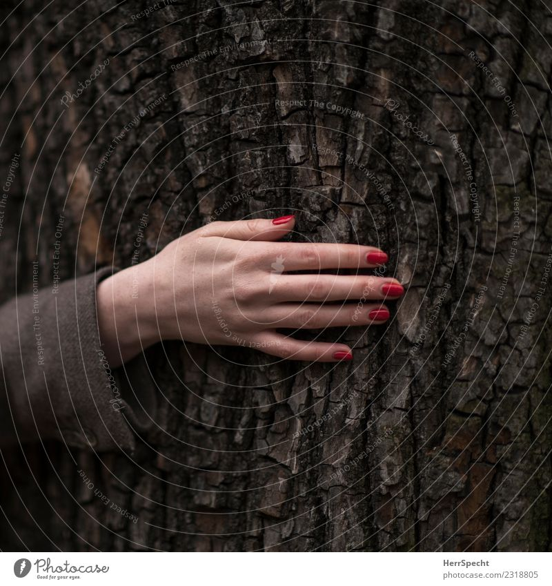 treehugging Feminine Young woman Youth (Young adults) Woman Adults Hand 1 Human being 18 - 30 years Plant Tree Authentic Elegant Natural Thin Eroticism