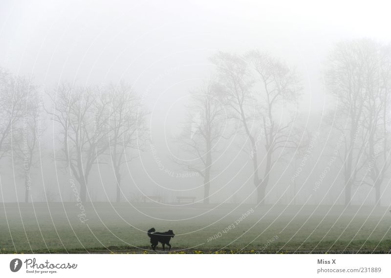 Dog Nature Tree Animal Dark Meadow Landscape Cold Park Weather Fog Running To go for a walk Pet Avenue Bad weather