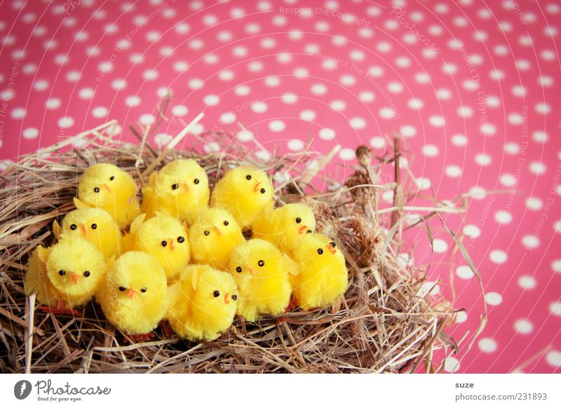 Twelve chickas Decoration Feasts & Celebrations Easter 12 Sit Small Funny Cute Beautiful Yellow Pink Chick Nest Straw Spotted Kitsch Colour photo Multicoloured