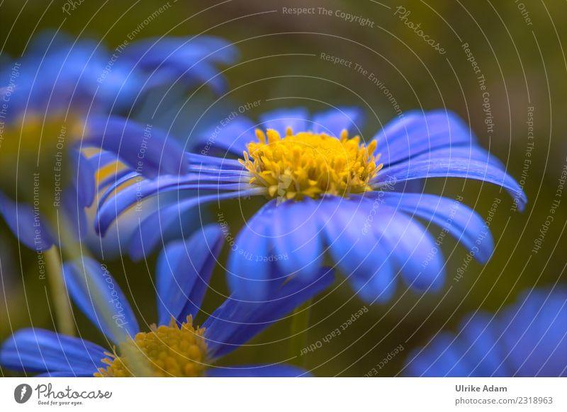Nature Plant Summer Blue Flower Spring Blossom Birthday Blossoming Soft Easter Wellness Delicate Marguerite Spring fever