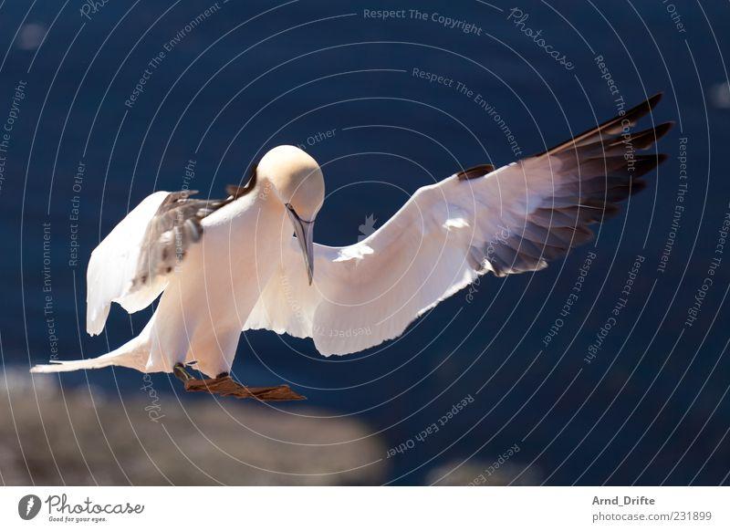 Nature Animal Coast Air Bird Elegant Flying Wing North Sea Dynamics Beak Ocean Plumed Majestic Landing Environment