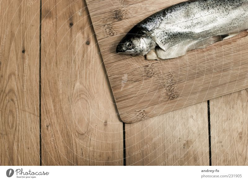 fish Animal Fish 1 Wood Lie Fresh Brown Trout Tabletop Wooden board Scales Food Organic produce Subdued colour Animal portrait Wet Bird's-eye view Colour photo