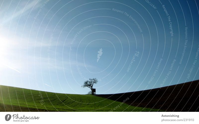 solitary Environment Nature Landscape Plant Earth Sky Cloudless sky Sun Spring Summer Climate Weather Beautiful weather Tree Grass Meadow Field Hill Blue Brown