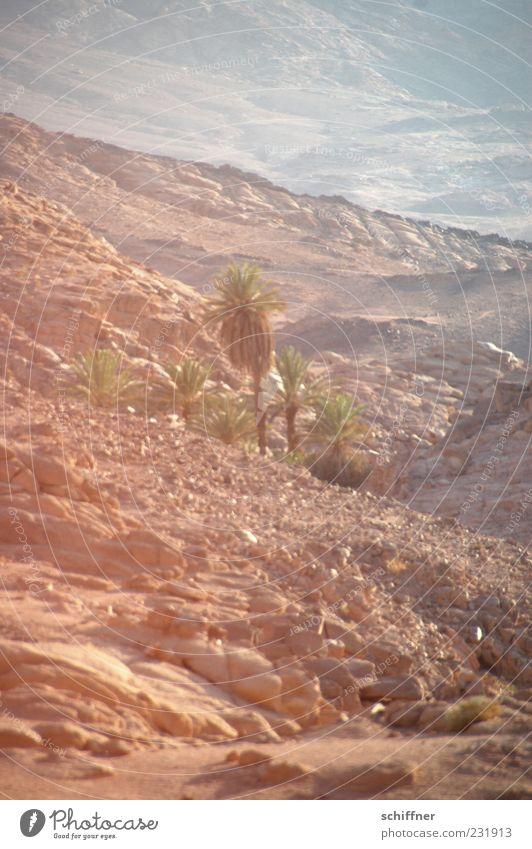 oasis Desert Oasis Hot Water Source Palm tree Warmth Badlands Extensive Stone Gravel Sand Sandstorm Habitat Vigor Far-off places Mirage Mount Sinai