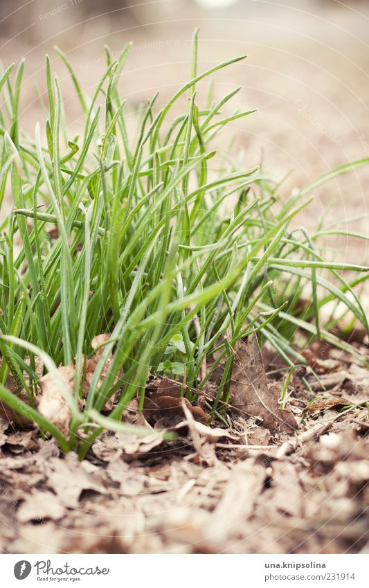 Nature Green Plant Leaf Environment Grass Spring Natural Earth Growth Fresh Blade of grass Tuft of grass