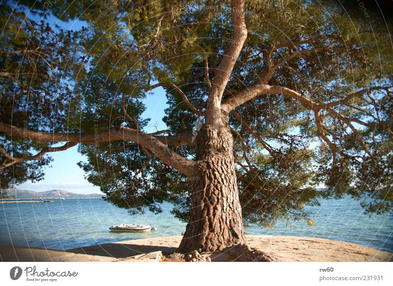 Water Tree Plant Vacation & Travel Summer Ocean Coast Power Mediterranean sea