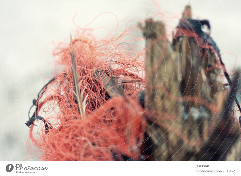 the red thread Environment Nature Wood Red Chaos Environmental pollution String Muddled Plastic Discovery Flotsam and jetsam Dirty Knot Untidy Colour photo